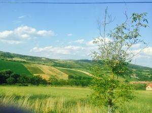 14. Romania Hillside with Tree