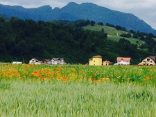 15. Romania Poppy Field and Hillside